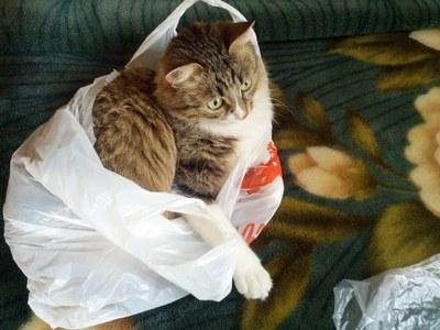 kat i sæk
