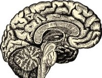Ph.d.-forsvar om sproget i hjernen